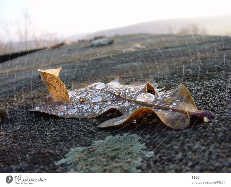 blatt Natur Wasser Blatt Herbst Wassertropfen vertrocknet binden