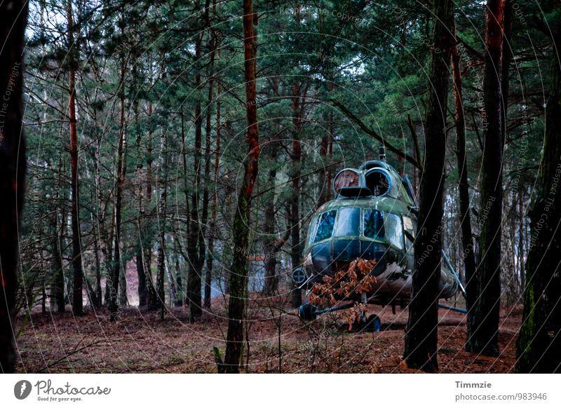 lost in the woods Wald Kunst Luftverkehr Vergänglichkeit Vergangenheit Verfall Ausstellung Fluggerät Hubschrauber