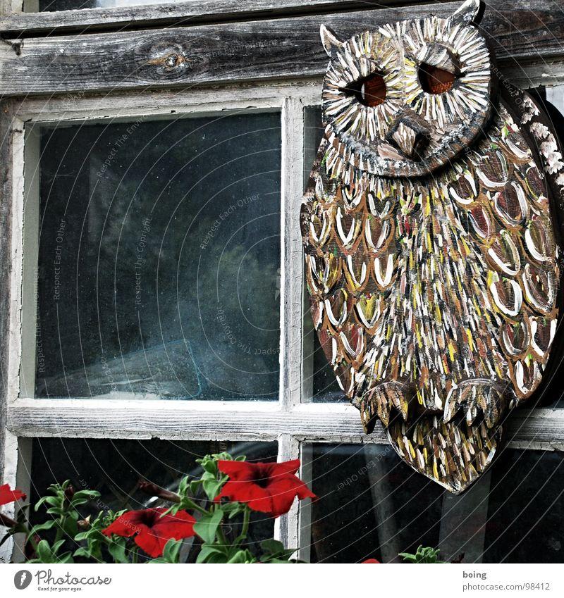 Eule mit Katzenaugen Fenster Nachthimmel Vertrauen Wohnzimmer Sternschnuppe Blumenkasten Paradiesvogel