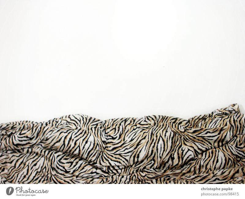 Tiger im Bett Wand retro Kitsch Falte Bettwäsche gestreift kuschlig Bettdecke unordentlich Billig Faltenwurf Achtziger Jahre Tigerfellmuster geschmacklos