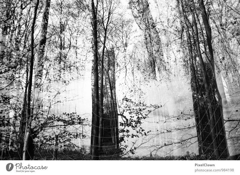 schwarzer Wald Natur Ferien & Urlaub & Reisen Pflanze weiß Baum Landschaft ruhig Tier dunkel Gefühle Holz außergewöhnlich Stimmung Kunst