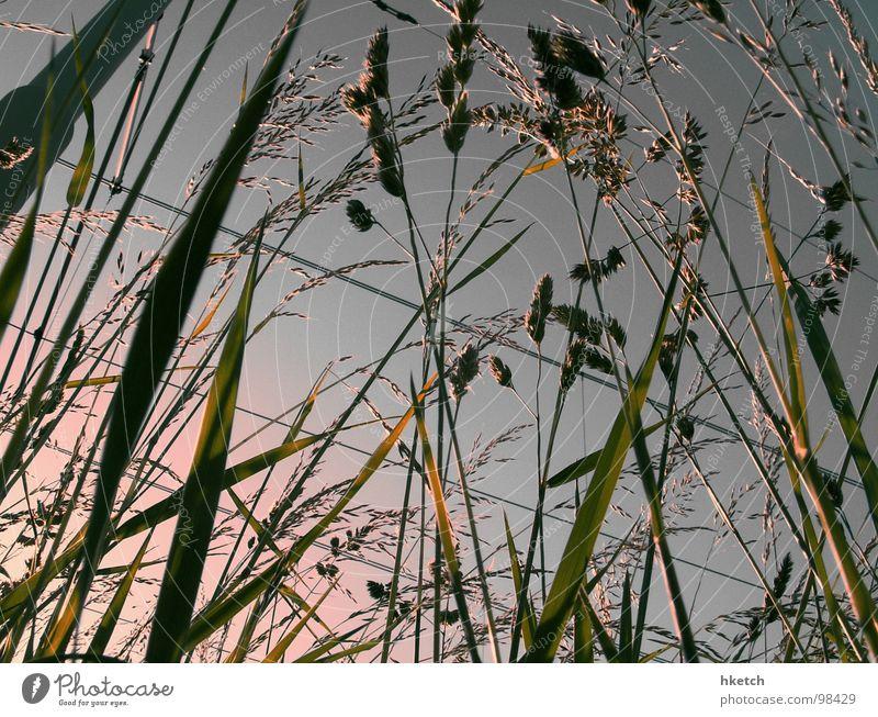 BAHNSTREIK Himmel Sonne Sommer Wiese Wärme Gras Frühling gehen wandern Beton Eisenbahn Elektrizität Spaziergang Physik Stengel Halm