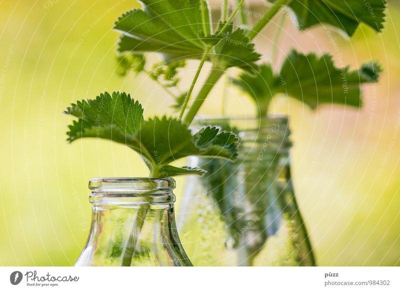 Flaschengrün Lebensmittel Kräuter & Gewürze Ernährung Bioprodukte Vegetarische Ernährung Glas Natur Pflanze Blatt Grünpflanze Dekoration & Verzierung Duft