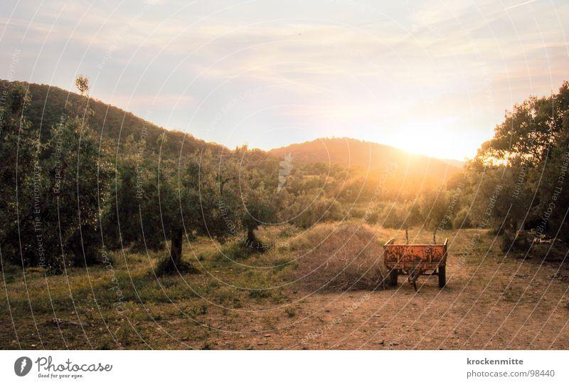 Abendlicht Natur Baum Sonne Ferien & Urlaub & Reisen Wärme Romantik Italien Physik Bauernhof Landwirtschaft Toskana Stroh Schubkarre