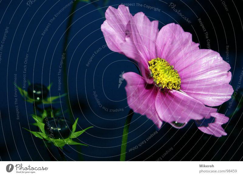 Lass mich trocknen!! Natur blau Wasser grün schön Blume gelb Fenster dunkel Wiese Gras Traurigkeit Regen Wohnung rosa glänzend