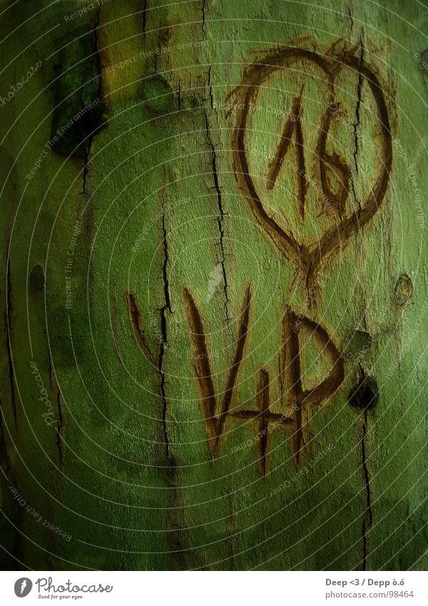 V+P = <3 alt grün Baum schwarz Liebe braun Zusammensein Herz Furche Baumrinde geschnitzt