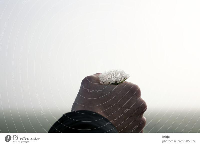 Eine Blume für die Möwe. Glückwunsch! Lifestyle Freizeit & Hobby Ausflug Ferne Freiheit Hand 1 Mensch Umwelt Luft Wassertropfen Herbst Winter Nebel Blüte