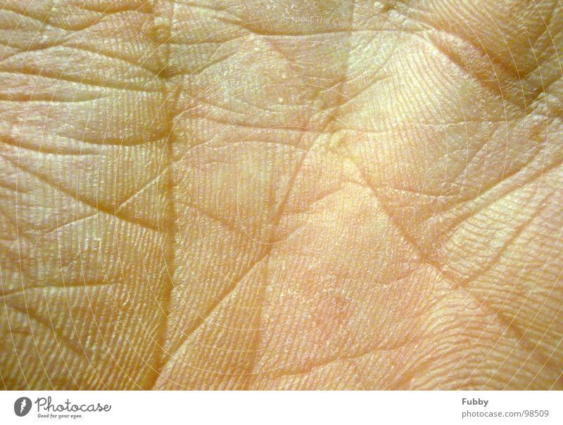 Lifeline Hand Haut Falte Blattadern Körperteile Gliedmaßen Hautfarbe