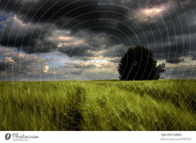 STORM IS COMING Wolken Sturm Roggen Feld Baum dunkel bedrohlich grün Horizont Einsamkeit Traktorspur Regen Donnern Herbst Getreide Ferne Storm Gewitter Natur