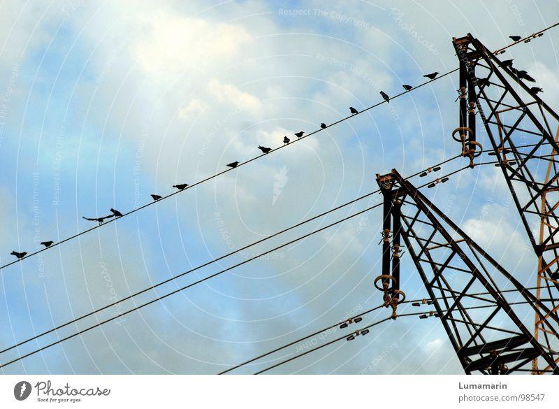 Wie am Schnürchen Elektrizität Strommast Oberleitung Starkstrom Stahl Vogel Krähe aufgereiht hocken Erfolg Wolken schwarz weiß Industrie Kabel Leitung