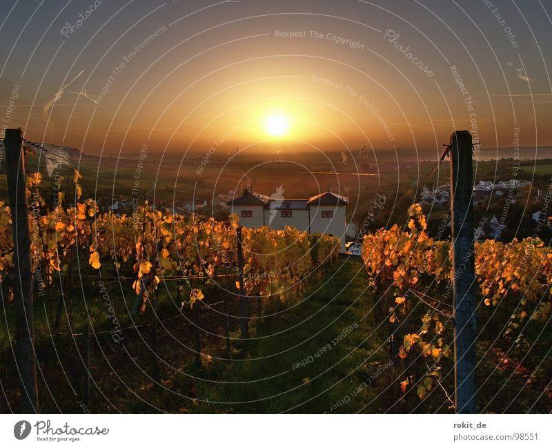 Morgäään.... Sonnenaufgang Licht Stimmung Morgen aufstehen wach Guten Morgen Weinberg Rheingau Eltville Herbst aufwachen niedlich Industrielandschaft Weinlese