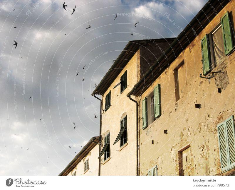 Ein Haus in der Toskana Wolken Vogel Gebäude Italien Ferien & Urlaub & Reisen Fenster Fensterladen schlechtes Wetter Leidenschaft Fassade Sturm grün Himmel