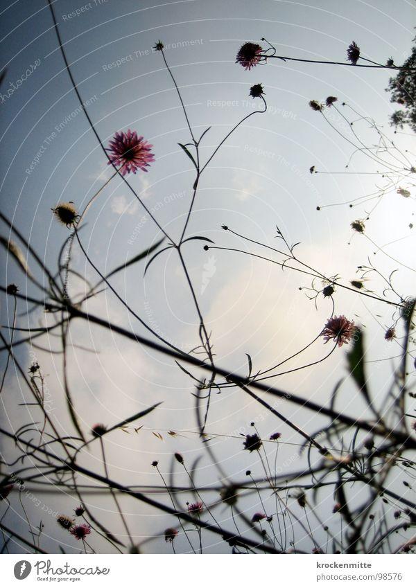 Ein Sommermorgentraum II Natur Himmel Blume Pflanze Ferien & Urlaub & Reisen Wolken Wiese Stil Blüte Wachstum Italien Toskana verzweigt