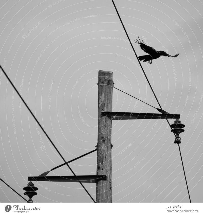 Vogel und Energie Natur weiß schwarz Holz grau Linie Energiewirtschaft Elektrizität trist Technik & Technologie Kabel Strommast Leitung Maserung Versorgung