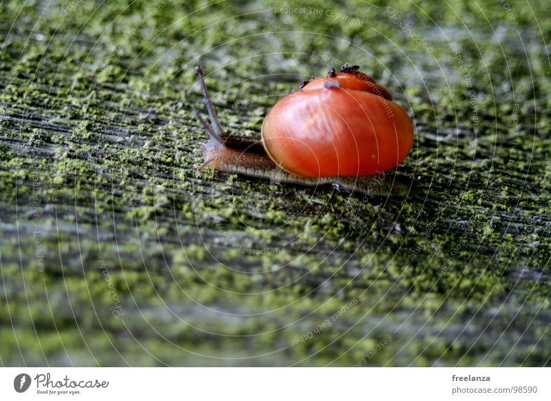 Schnecke Natur grün Tier Haus Auge Leben Gras Regen nass Geschwindigkeit Wassertropfen Lebewesen feucht Spirale Glätte