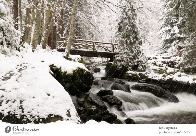 Natur Baum Landschaft Winter Wald Leben Schnee elegant Tourismus Energie Abenteuer Güterverkehr & Logistik Frost Fluss gefroren Teamwork