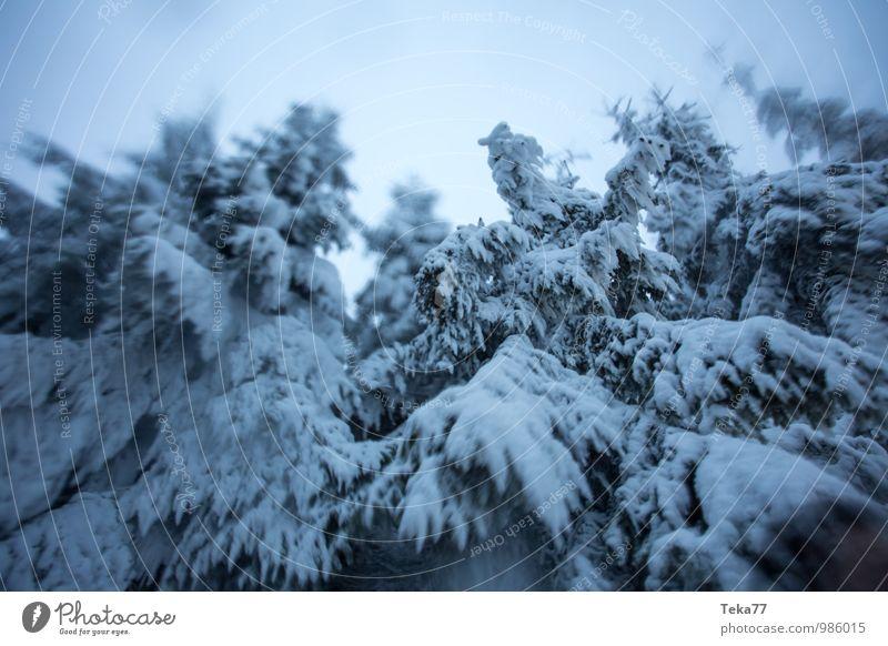Tannenschneewind Ferien & Urlaub & Reisen Winter Umwelt Natur Eis Frost Hagel Schnee Schneefall Pflanze Baum Abenteuer Farbfoto Gedeckte Farben Außenaufnahme