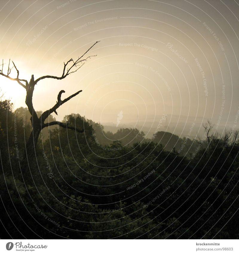 Morgenlicht Baum Toskana Italien Wald Dämmerung Nebel Sonnenaufgang Gegenlicht Trauer Ast Traurigkeit