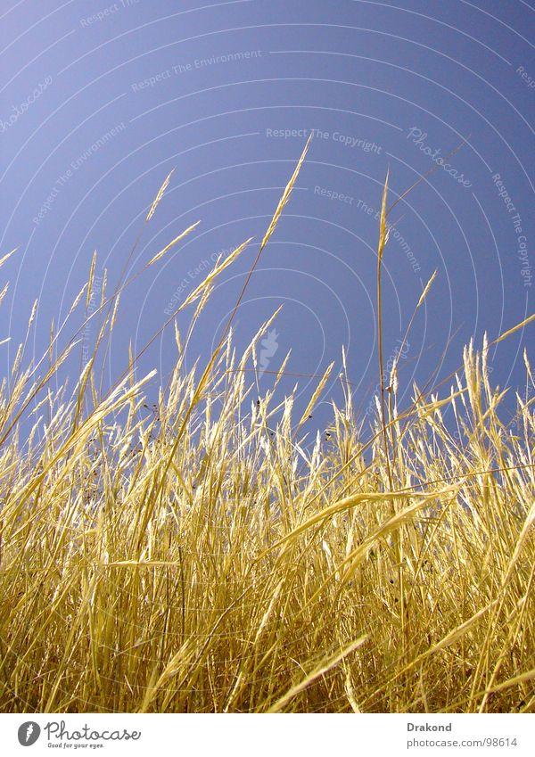 Field of straw Himmel blau Pflanze ruhig gelb Freiheit Luft Feld Brand Bodenbelag Frieden Weizen Stroh sensibel Tanzfläche