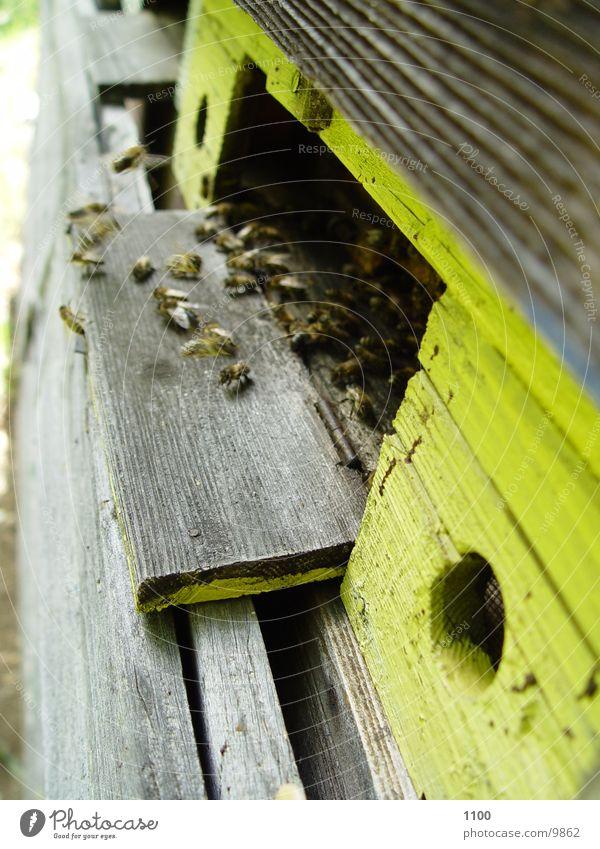 Bienenflug Verkehr Luftverkehr Biene Imkerei Honig Bienenstock