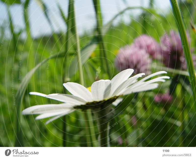 Blümchen Blume Wiese