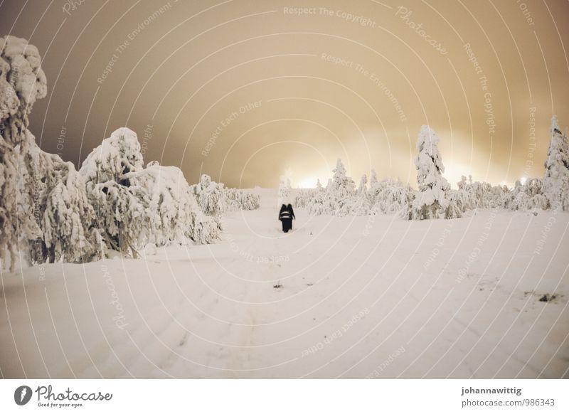 she's alone out there Mensch Baum Erholung Einsamkeit Landschaft ruhig Winter Wald kalt Umwelt Leben Schnee Wege & Pfade Eis Angst Idylle