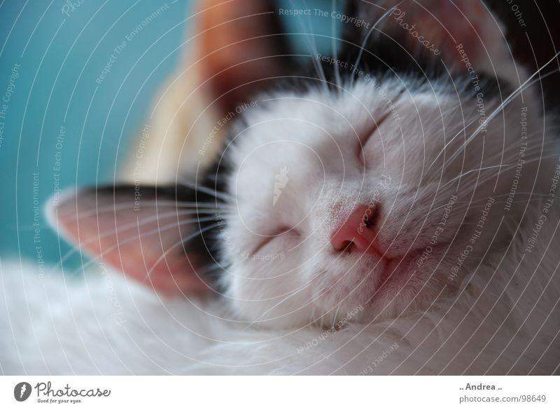 Die kleine Emma Katze Erholung Zufriedenheit Mund Nase schlafen Fell Ohr Säugetier Schnurrhaar ruhen Tier