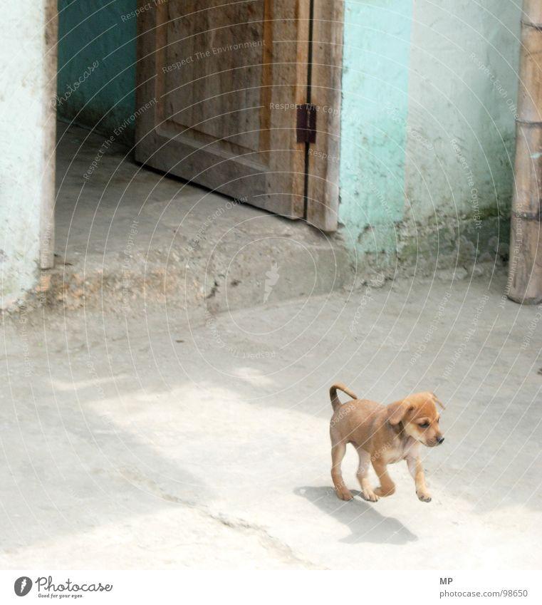 Puppy Deluxe Hund Spielen Tür süß Welpe Neugier Fell Tier Haustier niedlich klein blau Tierjunges kuschlig winzig 1 Sonnenlicht