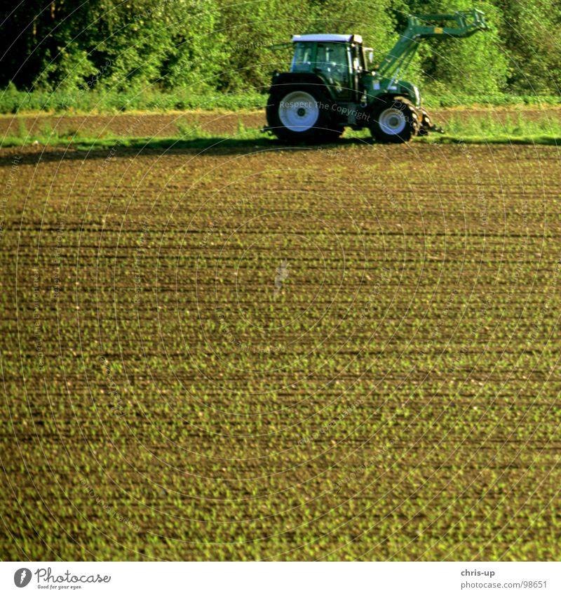 Traktor 1 Feld Landwirt Landwirtschaft Arbeit & Erwerbstätigkeit KFZ Nutzfahrzeug Fahrzeug Diesel Biodiesel Fußweg Landstraße Pflug Gemüsebau braun grün