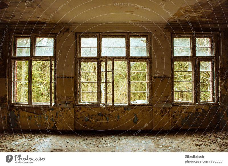 Windows Natur Baum Wald Haus Einfamilienhaus Mauer Wand Fassade Fenster Tür alt hässlich historisch Neugier ästhetisch Umwelt Ruine Menschenleer Unbewohnt