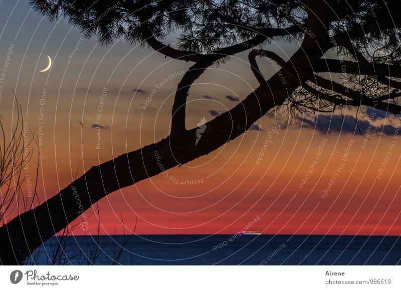 Zeiten des zunehmenden Mondes Natur Landschaft Urelemente Wasser Himmel Wolken Nachthimmel Baum Pinie Nadelbaum Meer gold rot schwarz Romantik Idylle Sichelmond