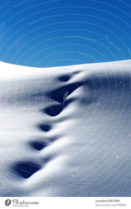 Pulverschnee kalt Schatten Eis schön Jahreszeiten Romantik Einsamkeit Trauer Winter weiß nass dunkel Winterstimmung Außenaufnahme Natur Landschaft Frost Schnee