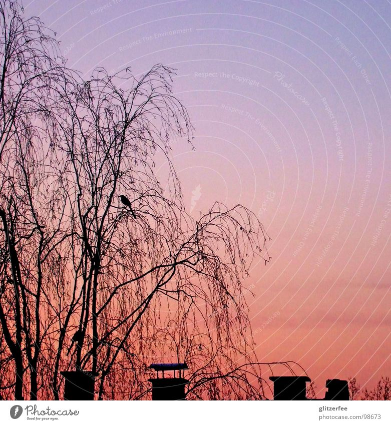 can i sell this sunset  in return for a sunrise? Himmel Baum Sommer ruhig Herbst Vogel Dach Kitsch Schornstein Osten Fee Weste Birke Rabenvögel Dachfenster
