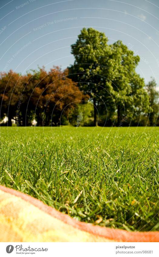 wellenwiese Natur Baum Sommer Wiese Gras Garten Park Wärme Wellen liegen Physik Teilung Sonnenbad Decke Handtuch Freibad