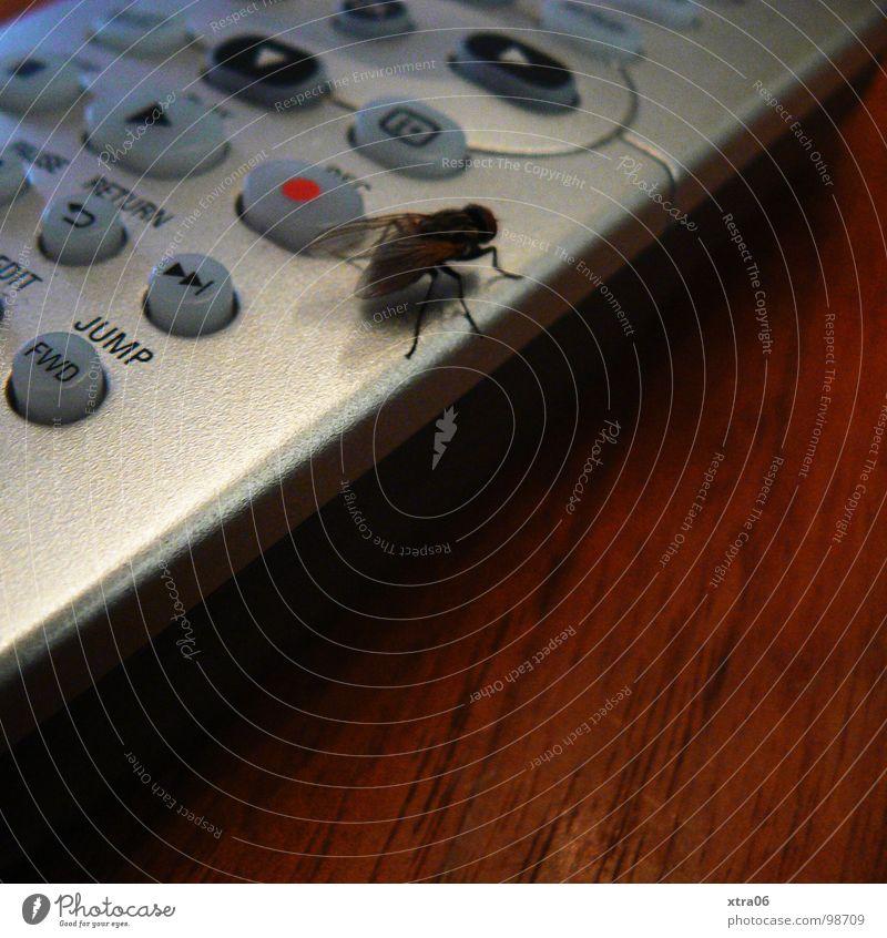 hey, weg da! ich will umschalten Fernbedienung Fernseher springen Tisch Holz Holztisch Insekt rot Dreieck silber stoppen Dinge fernesehen Fliege lästig berühren