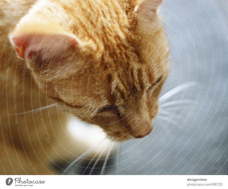 wachsam Katze Landraubtier Jäger Haustier Gesellschaft (Soziologie) Zusammensein beobachten Säugetier Hauskatze Jagd Jagdfieber warten