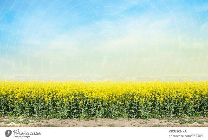 blühenden Raps Feld und blauer Himmel Design Natur Landschaft Pflanze Horizont Frühling Sommer Schönes Wetter Wiese Rapsfeld Rapsanbau Hintergrundbild