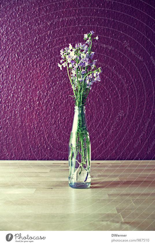 Deko Pflanze Blume Wand Stil Mauer Lifestyle Stimmung hell Wohnung Design Häusliches Leben Dekoration & Verzierung leuchten frisch Tisch Blühend