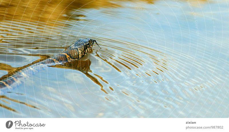Wasser Tier Umwelt Wildtier Überraschung Schlange protestieren Gerechtigkeit