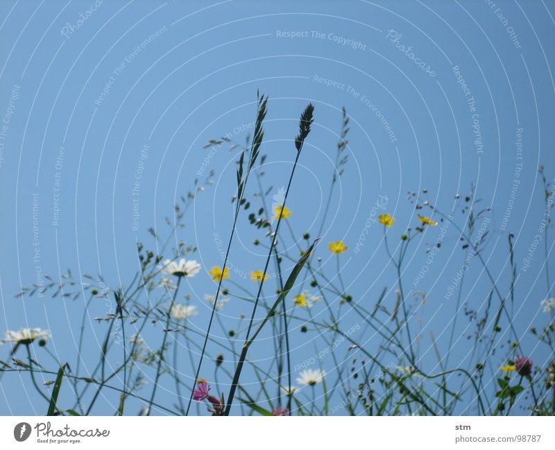 blau 03 Himmel Blume Spielen Blüte Gras Berge u. Gebirge wandern Pause Alpen Bergsteigen Alm Bergwiese Heilpflanzen Alpenwiese