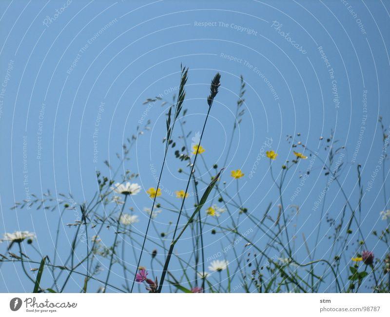 blau 03 wandern Pause Blume Gras Bergwiese Alpenwiese Blüte mehrfarbig Spielen Bergsteigen Himmel Berge u. Gebirge Alm Heilpflanzen