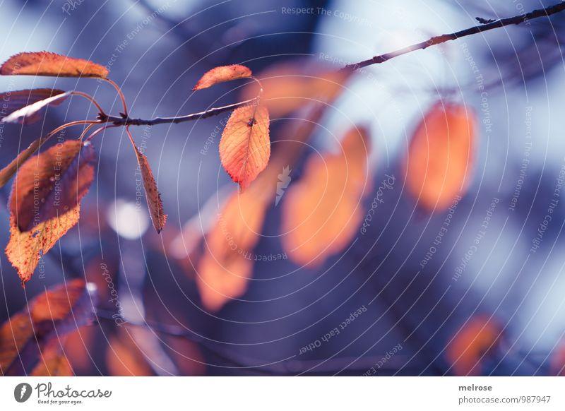 Melancholie Natur blau Baum Erholung Blatt dunkel kalt Umwelt Leben Traurigkeit Herbst natürlich Tod grau träumen gold