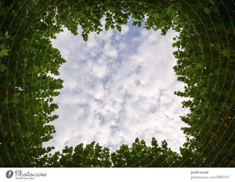 gewachsen zum Himmel Gartenbau Wolken Sommer Baum Blätterdach Rahmen Freiraum Quadrat einfach frei hoch natürlich grün Inspiration Symmetrie Wachstum Öffnung
