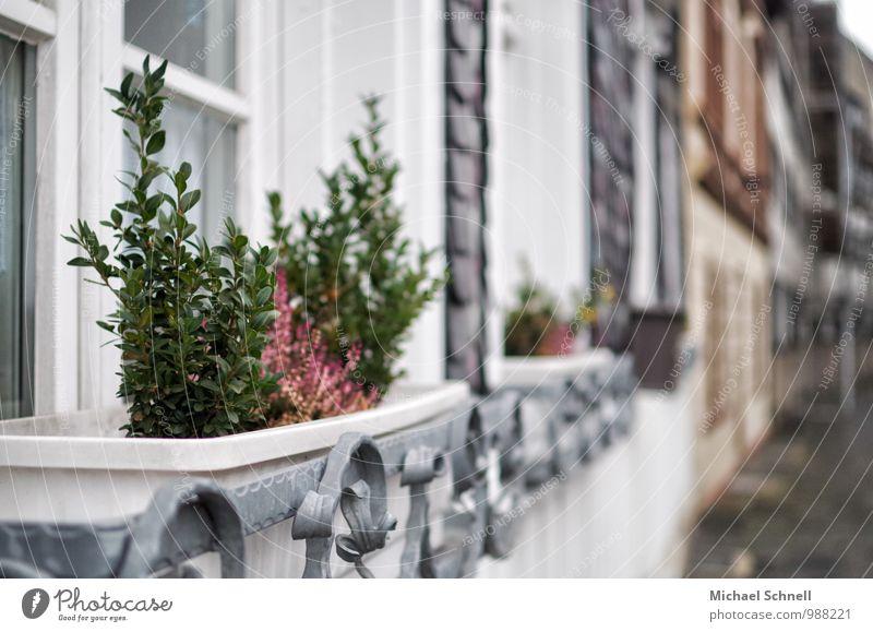 Pflanzen ruhig Haus Fenster Wachstum Häusliches Leben historisch Dorf Topfpflanze