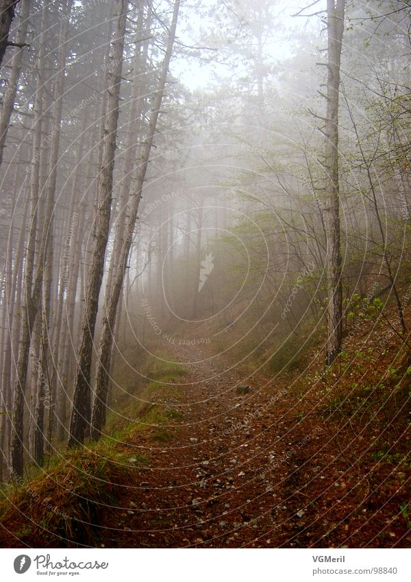 Weg durch den Nebel Herbst Wald Baum mystisch geheimnisvoll Sträucher Fußweg Stimmung Märchen fantastisch Märchenwald Frieden tree Wege & Pfade Spaziergang