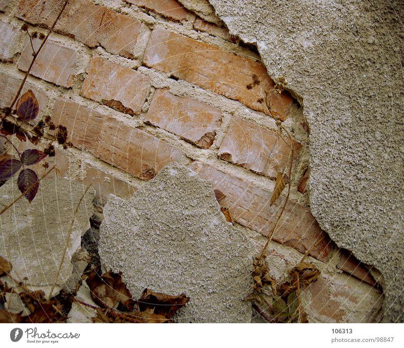 ANOTHER BRICK IN THE WALL Natur alt Pflanze rot schwarz dunkel Wiese Gefühle Gras grau Stein Mauer hell Stimmung braun Architektur