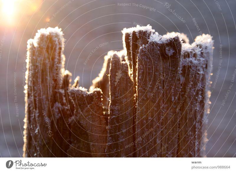 Alter bereifter Zaunpfahl in Gegenlicht Sonnenlicht Winter Eis Frost Holz einfach Gelassenheit Farbfoto Außenaufnahme Nahaufnahme Menschenleer Morgen Licht