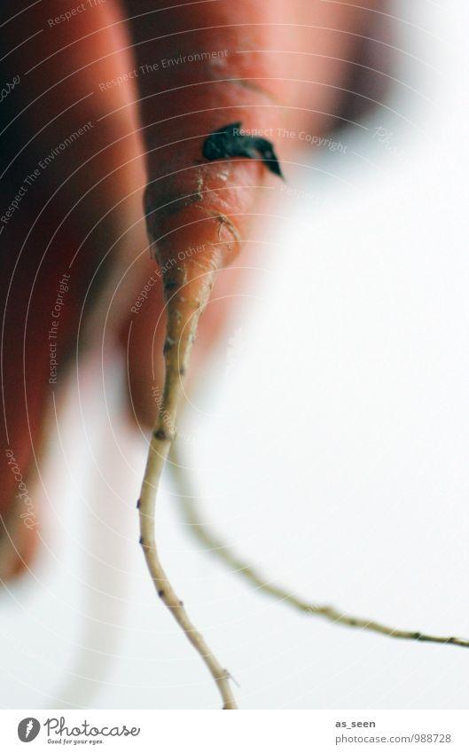Möhren Lebensmittel Gemüse Ernährung Essen Bioprodukte Vegetarische Ernährung Diät Slowfood Möhrensaft Lifestyle Gesundheit Gesundheitswesen Wellness Wohlgefühl