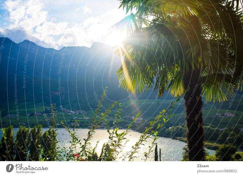 Oh du schönes Südtirol Natur Landschaft Sonne Sonnenlicht Sommer Schönes Wetter Wärme Baum Sträucher Palme Alpen Berge u. Gebirge See natürlich Warmherzigkeit