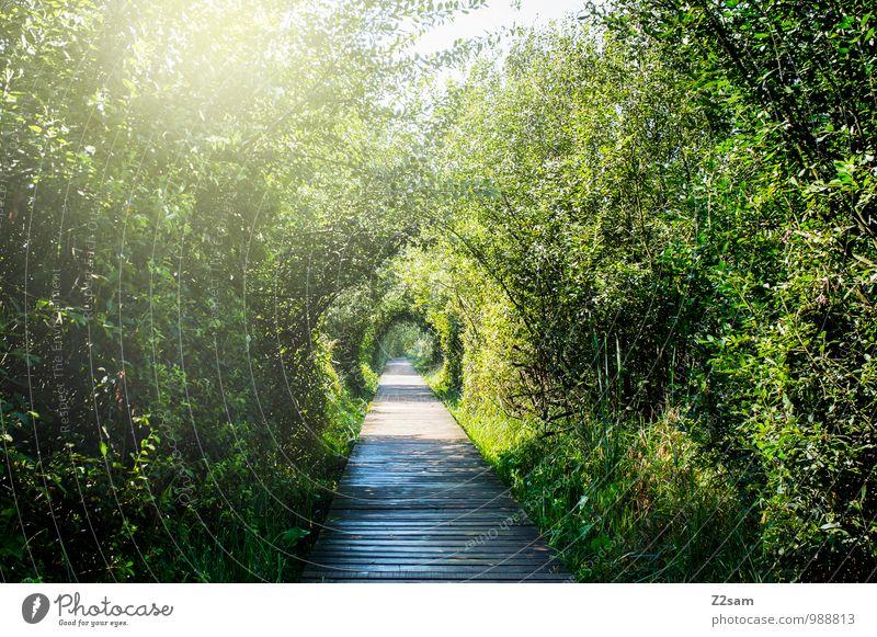Sonnenweg Umwelt Natur Landschaft Sonnenlicht Sommer Schönes Wetter Pflanze Sträucher Seeufer frisch nachhaltig natürlich Wärme Kalterer See Moor Steg